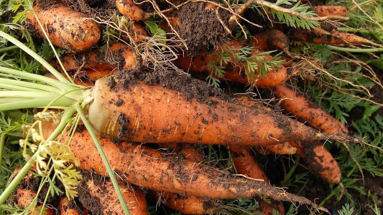 Perkembangbiakan Vegetatif Alami Pada Tumbuhan Pembelajar Net