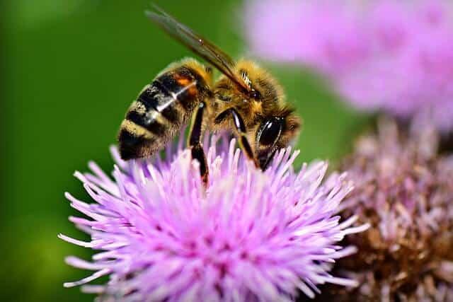 perantara penyerbukan pada tumbuhan melalui hewan