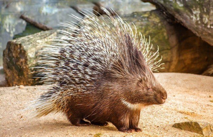 contoh soal adaptasi hewan terhadap lingkungannya
